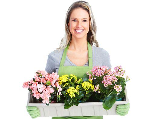 Kwiaty Prezenty Inne Kwiaty/prezenty Niż